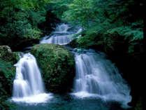 *赤目四十八滝。当館より車で5分。マイナスイオンたっぷり♪忍者の森では忍者体験もできます。