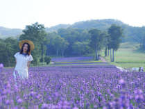 *玉原ラベンダーパーク/花と、みどりと、風の楽園