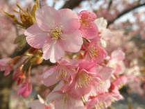 春の足音・・・♪