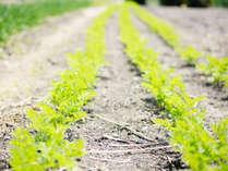 契約農場からいただく獲れたての新鮮野菜は太陽をたっぷり浴びてほんのり甘い…♪