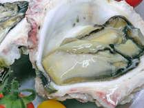 """【季節限定】初夏~夏は""""ぷりっぷり""""の大きな「丹後の岩牡蠣」をご賞味あれ♪"""