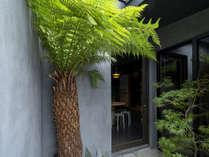 玄関の大きな木は「ソテツ」。昔から好まれ、二条城などの庭園にも見られる樹木です。