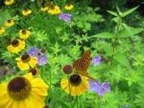 イコロの森で撮った蝶です♪