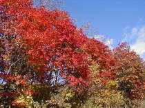 紅葉と露天風呂満喫1泊2食プラン