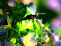 【6月限定】丹沢の大自然へ☆光り輝くホタルを見に行こう!【特典付きプラン】