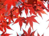 ★11月・12月限定★丹沢の紅葉を満喫!夕食時ワンドリンク付