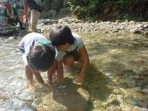 鬼怒川温泉小原沢に生息する川魚(にじます等)のつかみどりを通じて、自然とのふれあいを体験いただけます。