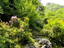 初夏体感プラン―ホタル鑑賞、紫陽花、かじか蛙の鳴き声に耳を澄ませて―(2食付)