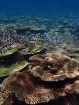 カヤックで行くシュノーケルで見られる大規模なテーブル珊瑚礁