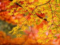 *紅葉は10月下旬~11月上旬が見頃です!