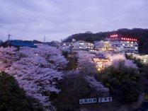 外観 桜時期