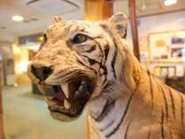 フロントロビーの虎