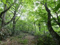 *【森林浴コース】新鮮な空気のなかで森林浴!