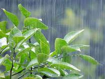 *【梅雨限定プラン】数種の泉質を湯巡りでさっぱり♪