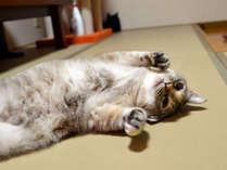 *新玉旅館の猫ちゃんです。みんなお客様に遊んでもらうのが大好きです♪