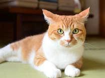 【ニャンコタイム最大4.5時間!】猫好きの方必見!2がつく日はにゃんこの日!感謝プラン☆/通常2食付