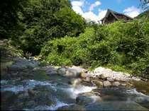 目の前の綺麗な渓流では泳ぐことも釣りもできます。クワガタもたくさん!