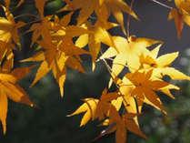 *【紅葉(イメージ)】色鮮やかな紅葉をお楽しみ下さい。
