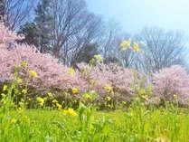 【お花見】桜や菜の花・つつじに彩られる♪春爛漫プラン☆全12品/竹コース◆2食付
