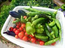 *【食材一例】地元の契約農家が特別に栽培してくれた自然農法のお米や野菜が食卓を彩ります。