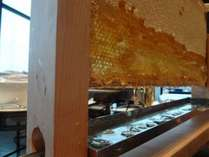 【朝食】巣蜜プレート♪焼きたてのパンやヨーグルトと一緒に☆