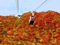 雲仙の紅葉とロープウェイ パート2