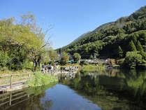 【金鱗湖】当館より徒歩15分☆由布岳や金鱗湖の神秘的な景色を一望♪湯ノ坪街道入口でアクセスも◎!
