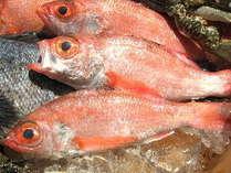 学名は赤ムツ。日本海側で多く取れ、喉から腹にかけて黒いので、ノドクロと。高級魚の代表格です。