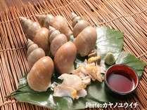 【お造りでは外せない食材 白ばい貝!】白ばい貝のお造り付プラン