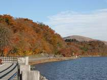 湖畔の遊歩道ではサイクリングや散策ができます