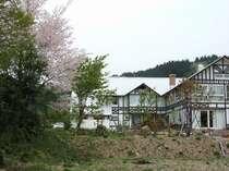 春の裏庭遅咲きのさくらが咲きます