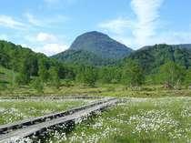 田の原湿原から見る笠ヶ岳と一面のワタスゲ