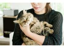 猫が自慢の宿です