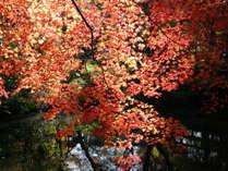 由布院の四季を感じる花咲く日本伝統の旅館!お部屋食◆朝食付きプラン