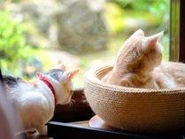 【じゃらん限定】★ねこカフェ10%OFF!【朝夕食・ねこカフェ付】夕食は地鶏焼き定食★