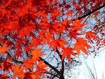 【紅葉鑑賞♪】歴史とロマンあふれる奈良を巡る秋の明日香村ウォーキングプラン【1泊2食付】