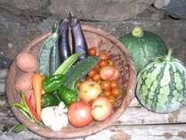 採れたての自家製食材です。エコファーマーは食の安全にこだわります。