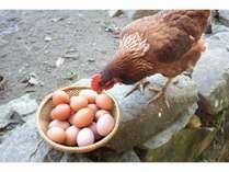 放し飼い地鶏卵をお好みの調理で好きなだけ食べていただきます。