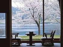 桜の時期はお部屋からお花見が楽しめます