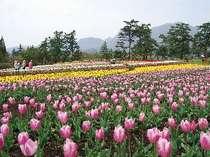 いろんな花が咲き誇る くじゅう花公園