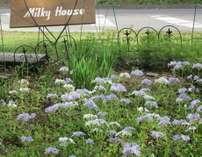 山野草の前庭