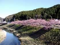 南の桜と菜の花まつり(会場へは車で15分)