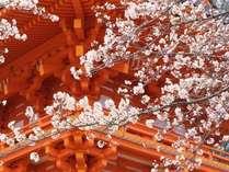 【京阪電車1日乗車券付】京阪電車でおでかけ♪芽吹きの春を愛でに行こう!~食事なし~