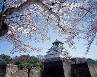 大阪城天守閣【春】大阪で人気の桜スポット