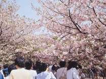 造幣局【春】 桜の通り抜け[所要時間:徒歩 約5分]