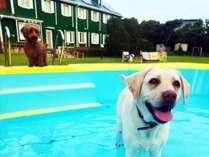 夏限定 ワンちゃんプールを設置! 水浴びしながら遊びましょう!!