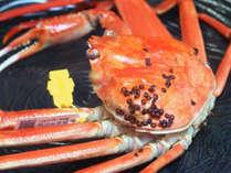 【蟹売り尽くしSALE!】【献上】茹で蟹2人で1匹&名物カニみそしゃぶ付きコース(献上)