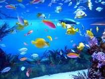 『八景島シーパラダイス』水族館とアトラクションを1日中楽しめる1DAYパス付き♪