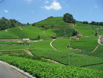 南山城村茶畑