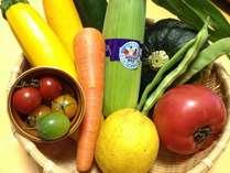 【新鮮野菜】裏磐梯や会津産のお野菜たち